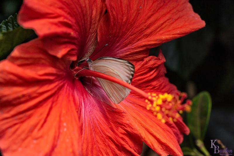 DSC_3322 scenes from Butterfly Gardens
