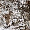 DSC_3745 The deer of Clove Lakes
