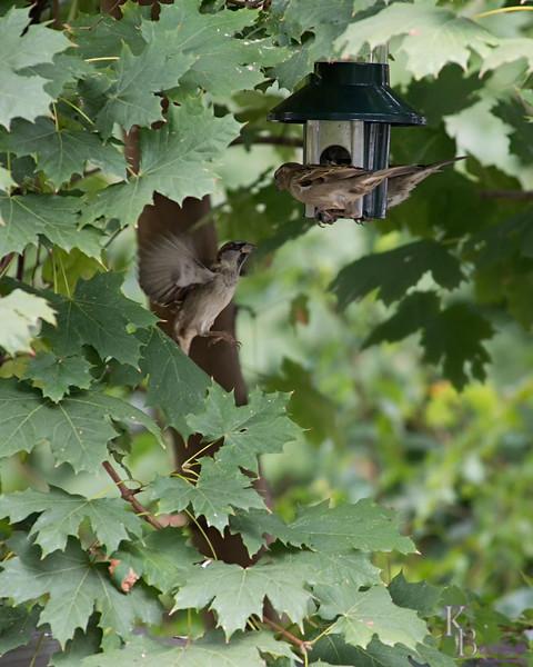 DSC_5963 backyard bird feeder