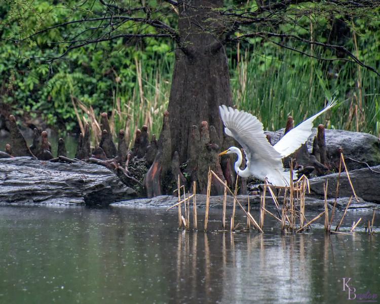 DSC_9205 rainy day at the pond