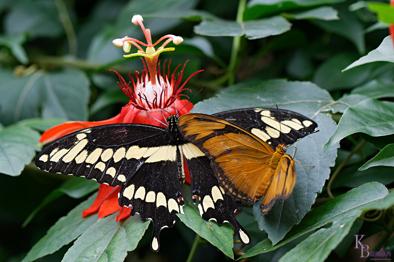 DSC_0931 scenes from the butterfly gardens_DxO