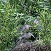 DSC_0382 heron's nest