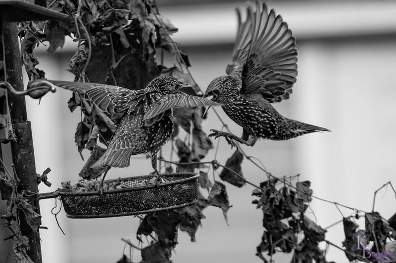 DSC_5698 backyard bird feeders