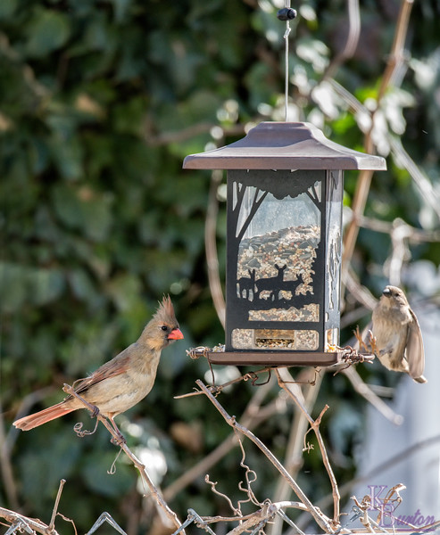 DSC_9862 backyard bird feeder