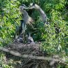 DSC_6915 heron's nest
