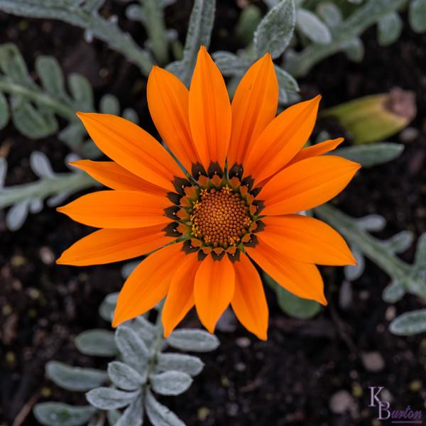DSC_3264 beautiful flower