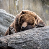 Let sleeping bears lie