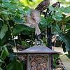DSC_7020 backyard bird feeder