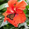 DSC_3039 scenes from butterfly gardens