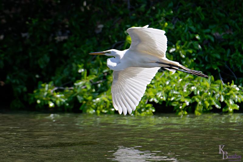 DSC_9385 taking flight_DxO