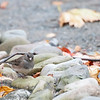 DSC_6665 feathered friends at Snug Harbor