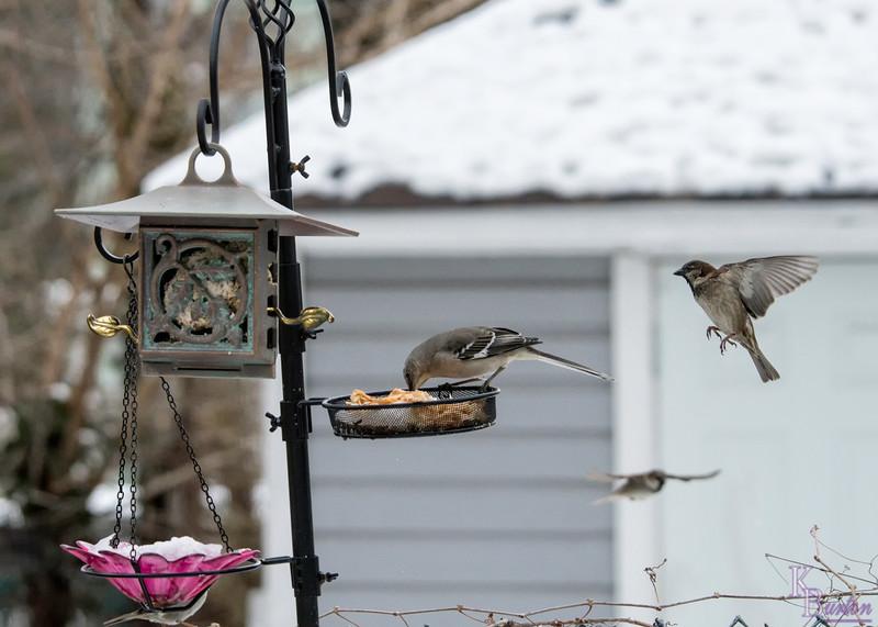 DSC_4053 backyard bird feeder