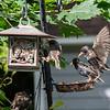 DSC_2691 backyard bird feeder