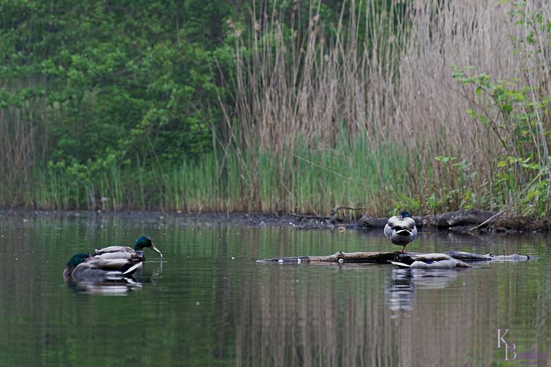 DSC_4326 scenes from Clove Lakes_DxO