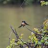DSC_5776 swallows