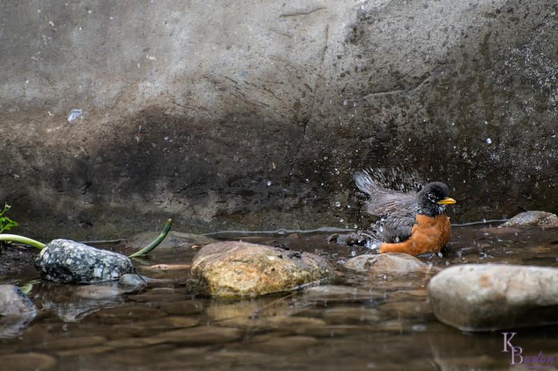 DSC_4211 bird bath
