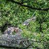 DSC_8882 clear shot of nest