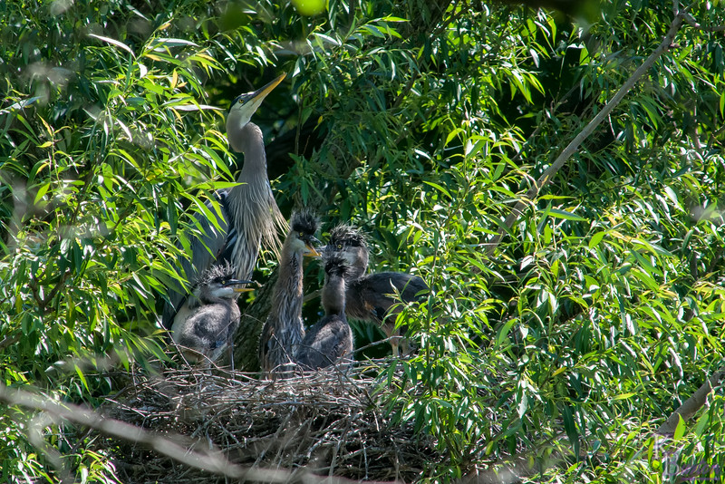 DSC_6946 heron's nest
