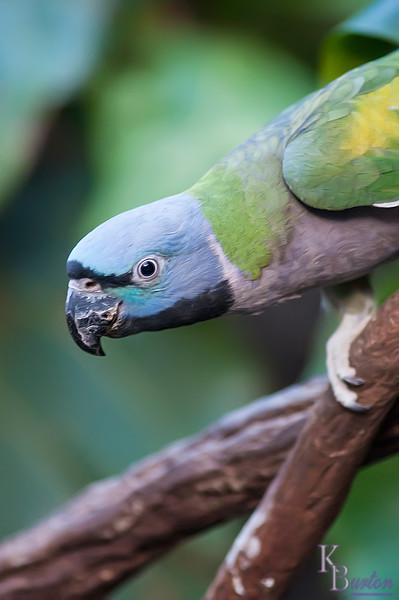 DSC_7098 parrots at the Central Park zoo