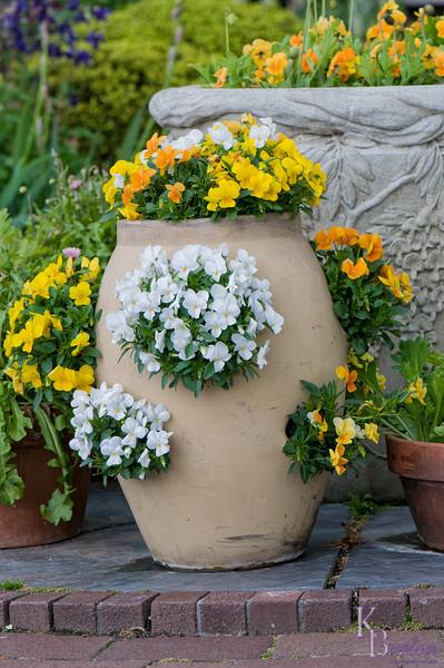 DSC_5603 flower pot