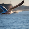 DSC_0826 wingman