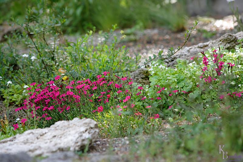 DSC_5252 scene's from the rock gardens