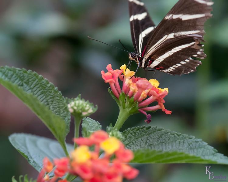 DSC_1097 scenes from Butterfly Gardens
