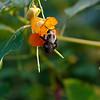 DSC_9825 hunting for nectar_DxO