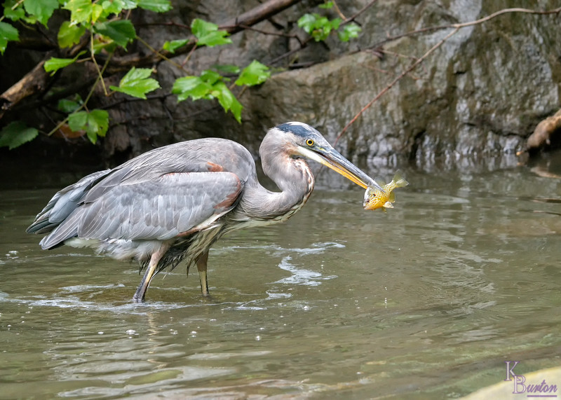 DSC_0482 grabbing lunch