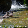 DSC_0462 taking a bath_DxO