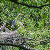 DSC_8768 heron's nest
