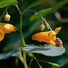 DSC_9780 hunting for nectar_DxO