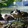 DSC_1313 summertime scenes from Clove Lakes_DxO