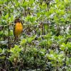 DSC_0350 a bird in the bush