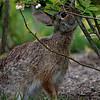 DSC_3921 bunny rabbit_DxO