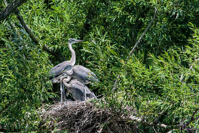 DSC_0036 heron's nest