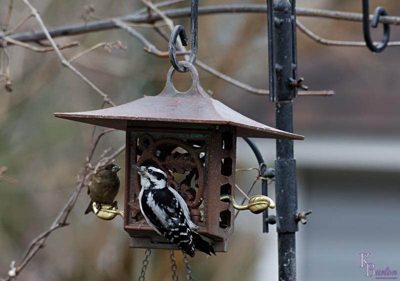 DSC_5156 backyard visitors_DxO