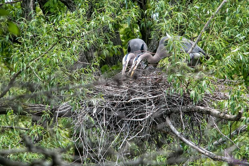 DSC_7355 heron's nest