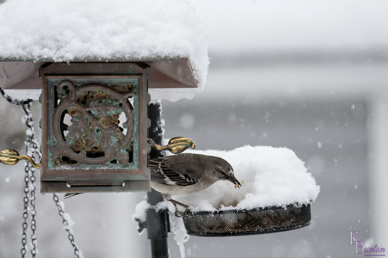 DSC_4531 winter scenes from my backyard