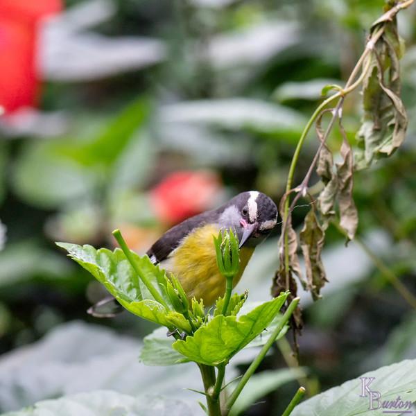 DSC_6449 scenes from butterfly gardens