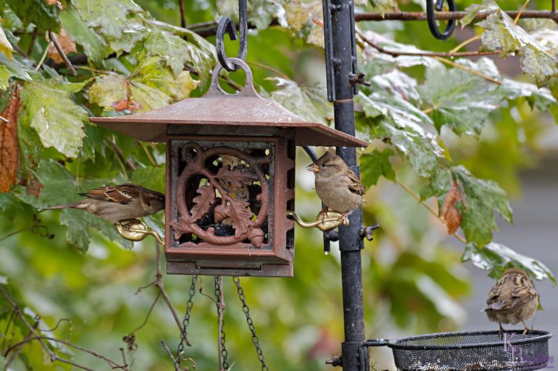 DSC_1578 backyard visitors_DxO