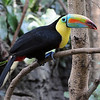 One of the first pictures I took with my new camera after around a 15 year absence from shooting with an SLR. I decided for my first location I would shoot at the Central Park Zoo. The little point and shoot digital camera I took with me on a cruise to the Caribbean a few months before this, was not able to prepare me for the quality I was going to receive from a serious DSLR. Back in the day when I used to shoot pictures I used slide film, and never used anything above 200 speed and rarely ever even using that. Usually ectachrome 100 or Fuji 50 or one of the Kodachrome's. I've got to admit I was a little worried about what quality I was going to get at the high ISO's this camera was capable of shooting at. When I turned the camera around and looked at this shot in the view screen my jaw dropped to the floor, as available light shots I only dreamed of back in the days of film, danced through my head. My D300 and I have been best friends ever since.