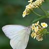 dsc_6763 the inhabitants of Butterfly Gardens