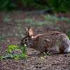 DSC_3832 bunny rabbit_DxO