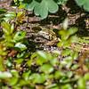 DSC_0453 camouflage
