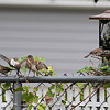 DSC_8081 backyard bird feeder