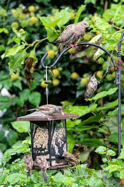 DSC_0077 backyard bird feeder