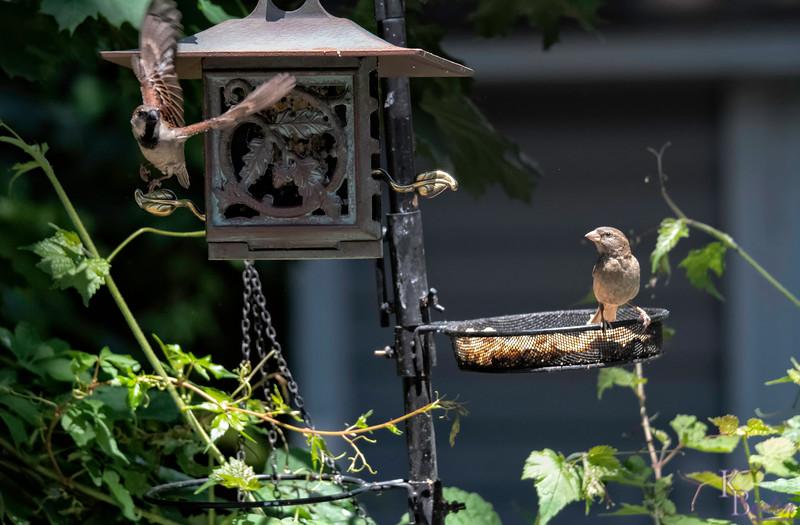 DSC_2974 backyard bird feeder