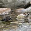 DSC_4314 bird bath