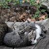 DSC_7201 kitten play
